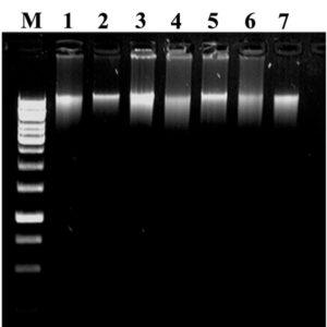 DNA_ladder