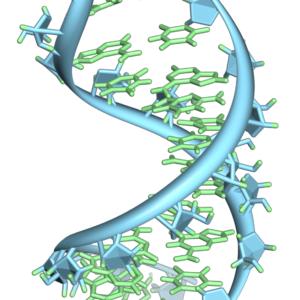 Pre-mRNA-1ysv-tubes
